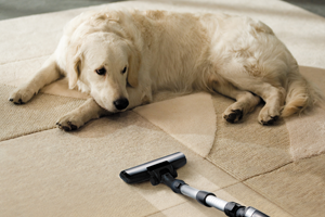 Pet Damage Clean Up Camarillo CA